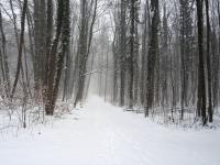 Im Wald auf dem Weg nach Sachsenhausen